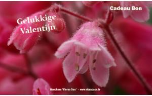 Gelukkige Valentijn